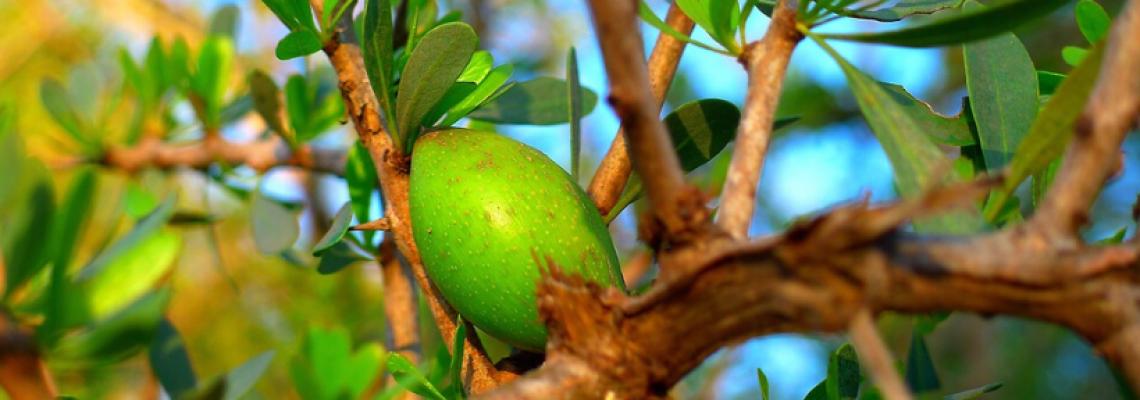 owoc argan