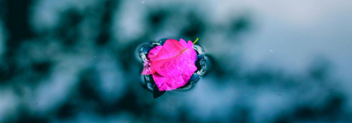 róża w wodzie